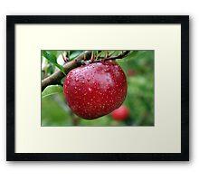 apple, Framed Print