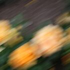 Rose Garden, Yellow by Doug Wilkening