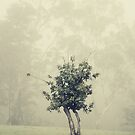 lonely tree by ozzzywoman