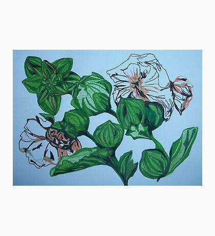 Garden Flowers Photographic Print
