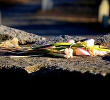 Salem, MA Cemetery Flowers by heatherjstewart