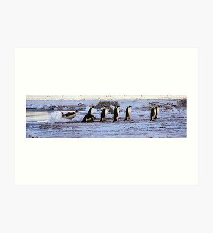 Emperor Penguins Coming Home Art Print
