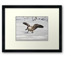 Stop Theif! Framed Print