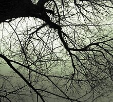 Greentree by Greg Rollo