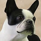 Jaylie the Boston by Cazzie Cathcart