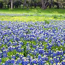Field of Texas Blues by Bill Morgenstern