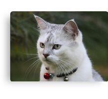 Cat Games Canvas Print