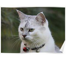 Cat Games Poster