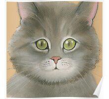 Gray kitten. Poster