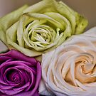 Rose Trio by Katherine Murray