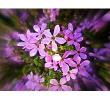 Dainty little Flower - Spring 2010 Photographic Print