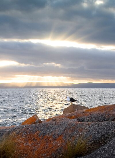The Gull by Anthony Davey