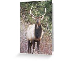 Park bull Greeting Card