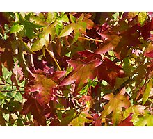 Autumn Collection Photographic Print