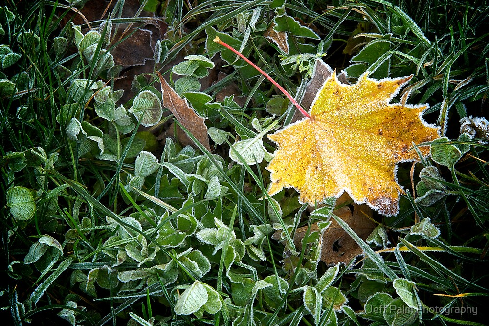 Frost Bitten by Jeff Palm Photography