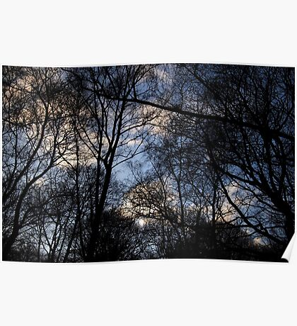 Tree Filled Sky Poster