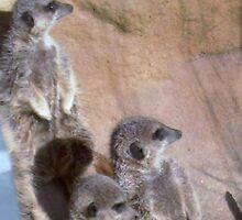 Three Wise Meerkats by FloraPeterArbor