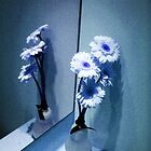 Gerbera Daisies in the Mirror by peterrobinsonjr