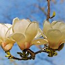 The magnolia chandelier by almaalice