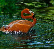 Splish Splash... by Robert H Carney