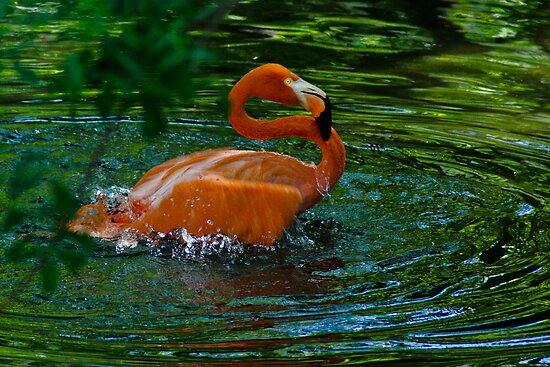 Splish Splash... by Robert H Carney
