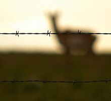 Fenced me in by Jarrod Ball