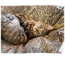 Camo Kitty Poster
