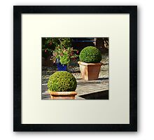 Box Topiary Framed Print