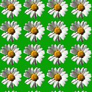 white daisy flowers on green by nadil