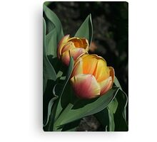 Tulip Twosome Canvas Print