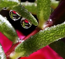 Droplets by PhotoTamara