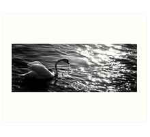 The white swan in the sundown Art Print