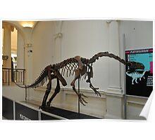 plateosaurus skeletal frame Poster