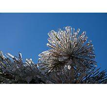 Ice Storm 2013 - Pine Needle Flower Photographic Print