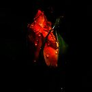 Rose On The Dark by saseoche