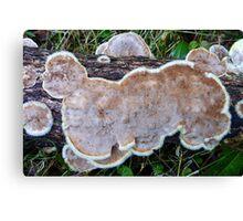 Flat Furry Fungis... Canvas Print