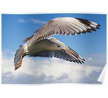 Gull's Flight - Lennox Head Poster