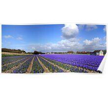 Purple panorama of spring Poster