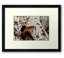 The Snake of My Adventure Framed Print