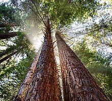 California Coastal Mendonoma Area by Jon Yager