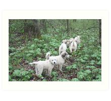 Leading The Way 6 Pyr Puppies Art Print