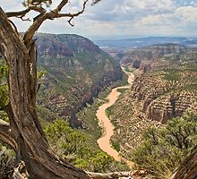 Green River from Harpers Corner by Kim Barton