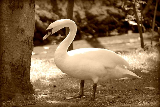 Swan Contemplating a Tree by AuntDot