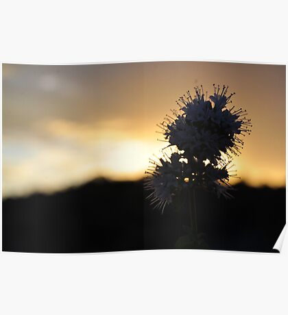 Flower Of The Sun Poster