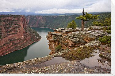 Red Canyon Rain by Kim Barton