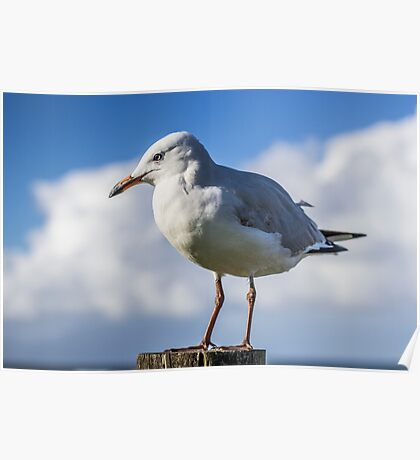 The Gull Post Poster