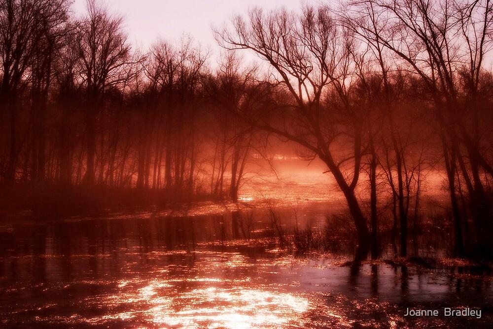First Spring Morning by Joanne  Bradley