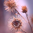 Spring Burrs by Bendinglife