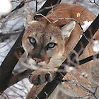 I see you by Tom Becker