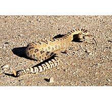 Great Basin Rattle Snake Photographic Print